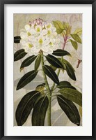 Rhododendron I Framed Print