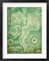 Sealife I Framed Print