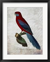 Parrot Jungle II Framed Print
