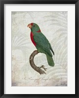 Parrot Jungle VI Framed Print