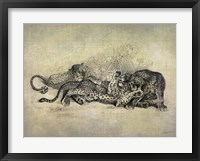 Big Cats I Framed Print