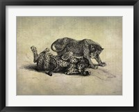 Big Cats II Framed Print