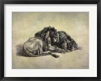 Big Cats IV Framed Print