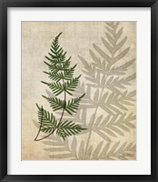 British Ferns III Framed Print