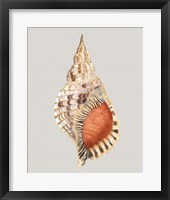 Giant Triton Framed Print