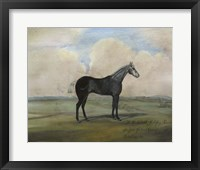 """""The Kicker,"""" A Steel Grey Racehorse Framed Print"
