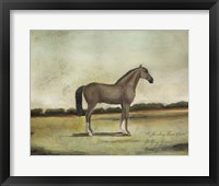 A Strawberry Roan Hunter Framed Print