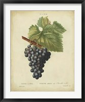 Framed Antique Bessa Grapes I