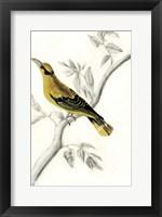 Rustic Aviary II Framed Print