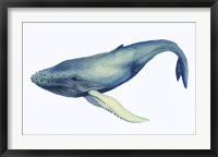 The Whale's Song I Framed Print