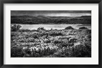 Views of Ireland VII Framed Print