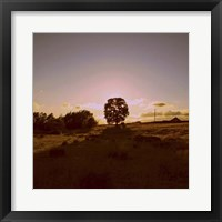 Sunset Field II Framed Print