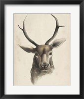 Watercolor Animal Study I Framed Print