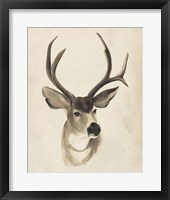 Watercolor Animal Study II Framed Print