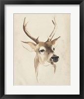 Watercolor Animal Study IV Framed Print