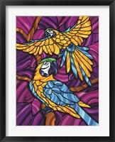 Framed Parrot A