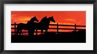 Framed Anticipating Dawn