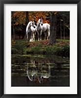 Framed Autumn's Reflection