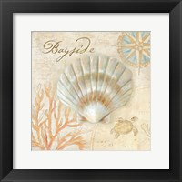 Nautical Shells II Framed Print