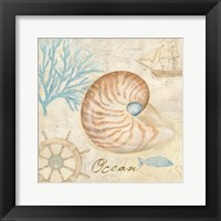 Nautical Shells III Framed Print