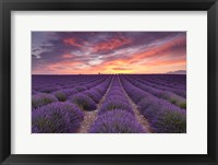Framed Sunrise over Lavender