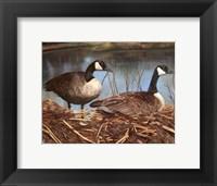 Framed Nesting