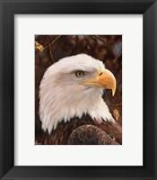 Framed Eagle