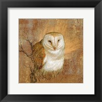 Framed Owl in the wood