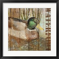 Framed Open Season Mallard