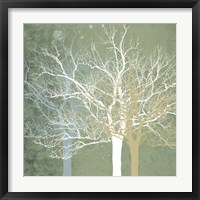 Quiet Forest Framed Print