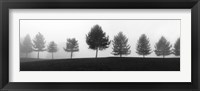 Tree Line Framed Print