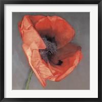 Rossa Framed Print