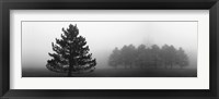 Misty Pines Framed Print
