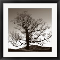 Oak Hillside Framed Print