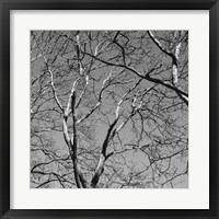 January Branches II Framed Print