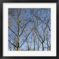 January Branches I (Color) Framed Print