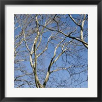 January Branches II (Color) Framed Print