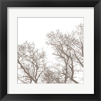 Majesty I Framed Print