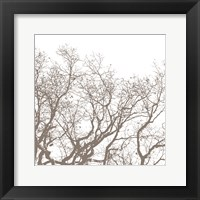 Majesty II Framed Print