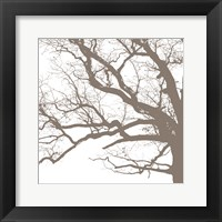 Majesty III Framed Print