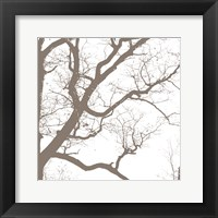 Majesty IV Framed Print