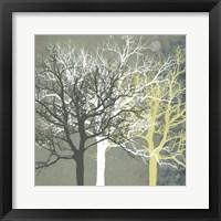 Tranquil Forest Framed Print