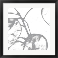 Silver Dollars I Framed Print