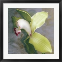 Tropicale Framed Print