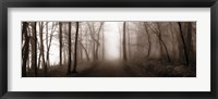 Woodland Walk (Sepia) Framed Print