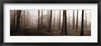 Forest Path (Sepia) Framed Print