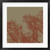 Cinnamon Tree I Framed Print