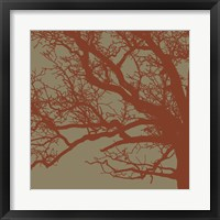Cinnamon Tree III Framed Print