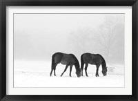 Feeding Pair Framed Print