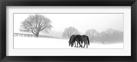 Grazing Pair Framed Print
